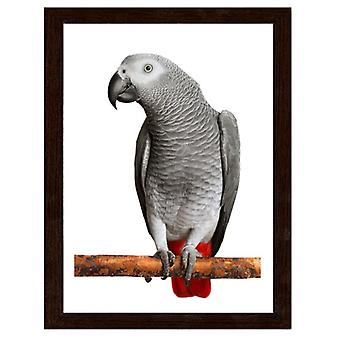 Picture In Brown Frame, African Gray Parrot