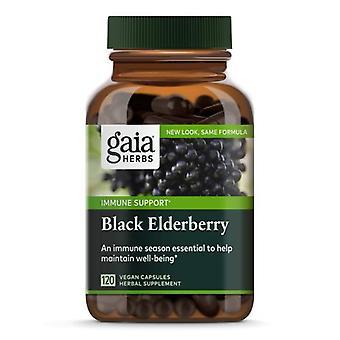Gaia Herbs Black Elderberry, شراب ليلي 3 أوقية