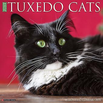 Bara smoking katter 2022 Väggkalender Kattras av Willow Creek Press