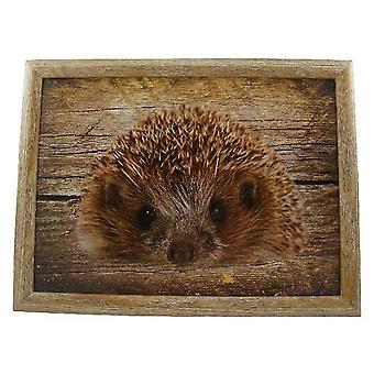 Laptop lap pillow or cushion Hedgehog