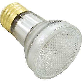 Halco R20FL100/S R20 60W  Halogen 115V Flood Light Bulb for Pool Lamp