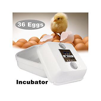 36 Позиция Автоматические цифровые семьи Инкубатор Курица Птица Инкубатор Пена Водяная гложка Ферма Инкубатор Инструменты для инкубации 40w