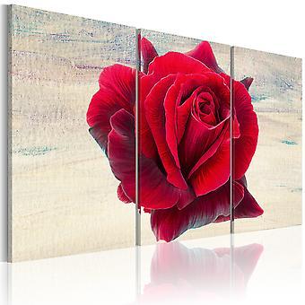 Quadro - Rosa lirica