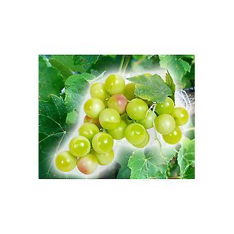 Fałszywe produkty winogron ozdoba
