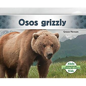 Osos Grizzly (Grizzly Bears) by Grace Hansen - 9781624026683 Book