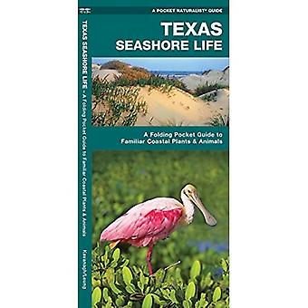Texas Seashore Life: An Introduction to Familiar Species