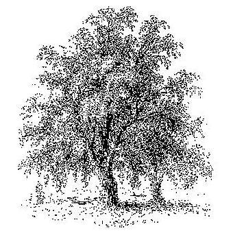 BP Il timbro montato sul legno di Acacia