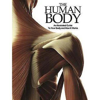 人間の体では-あなたのボディに図鑑とのしくみ