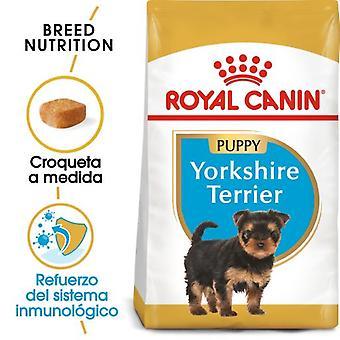 Royal Canin  Yorkshire Terrier Puppy Pienso para Cachorro de Raza