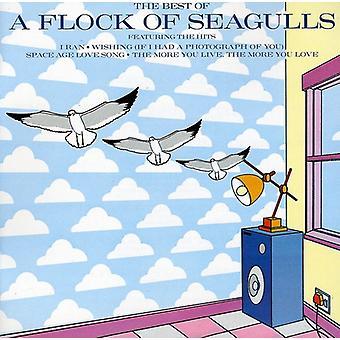 Flock måsar - bästa Flock av Seagulls [CD] USA import