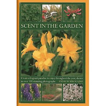 Doft i trädgården: skapa ett väldoftande paradis att njuta av hela året, visas i 100 fantastiska fotografier