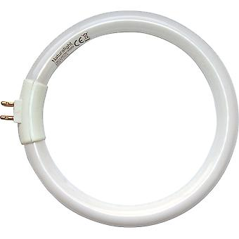 12W Natural Daylight Basics Oszczędność energii Circularight Tube Żarówka