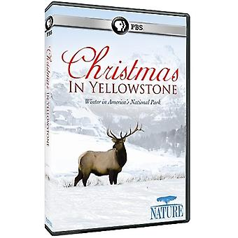 Nature: Christmas in Yellowstone [DVD] USA import