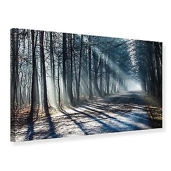 Canvas afdruk Forest in de lichtbundel