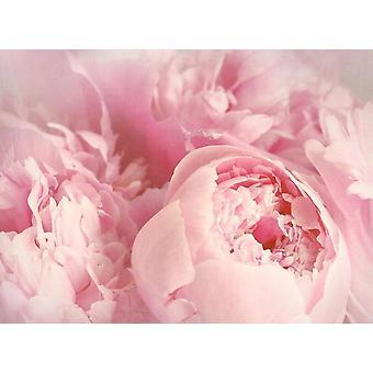 Fondo de pantalla Mural Peony Flores