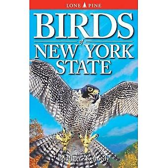 Birds of New York State