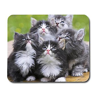Persian Kittens Mouse Pad