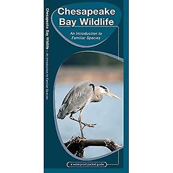 Chesapeake Bay Wildlife (Waterproof Pocket Guide)