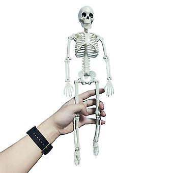 People Active Model Skeleto Anatomy Skeleton Skeleton Model Medical Learning