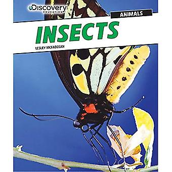 Insecten (Discovery Education: dieren)
