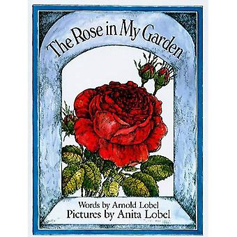 Róża w moim ogrodzie