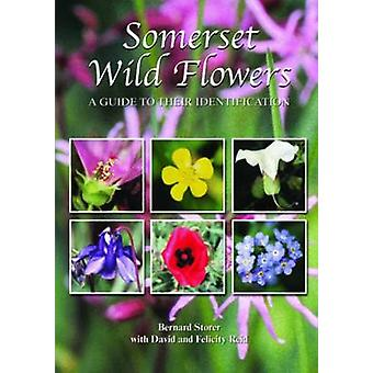 Somerset Wild Flowers - A Guide to Their Identification by Bernard Sto