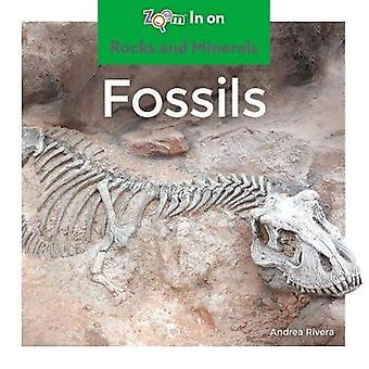 Fossils by Andrea Rivera - 9781532120435 Book