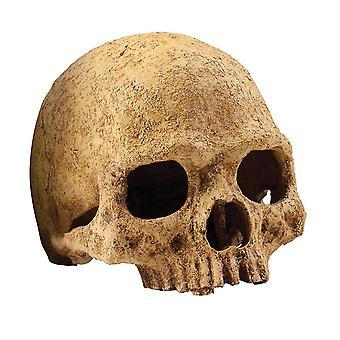 Exo Terra Primate Skull - Medium
