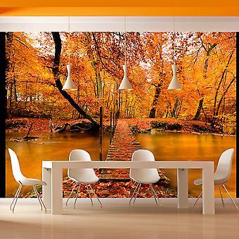 Fototapeta - Drewniany mostek w lesie