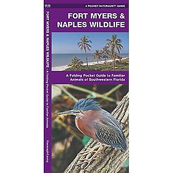 Fort Myers & Naples Wildlife (Pocket Naturalist Guide Series)