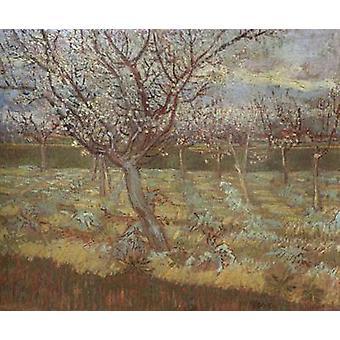 أشجار المشمش في زهر, فنسنت فان جوخ, 55x65.5cm