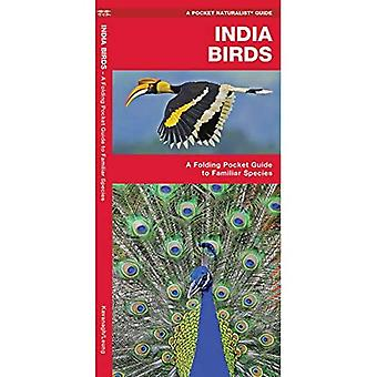 India Birds: A Folding Pocket Guide to Familiar Species (Pocket Naturalist Guide Series)