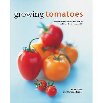 Växande tomater