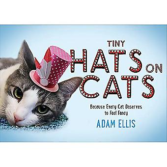 Pienet hatut kissoilla