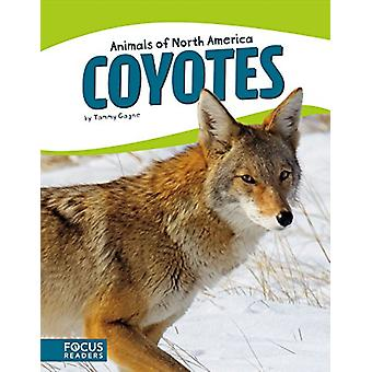 Animals of North America - Coyotes by Tammy Gagne - 9781635170900 Book