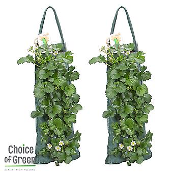 Choice of Green - Wall hanger for summer flowering plants - Strawberry Fragaris - ⌀25 cm - Height ↕50 cm