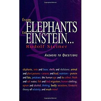 From Elephants to Einstein: Answers to Questions