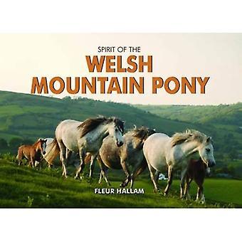 Geest van de Welsh Mountain Pony