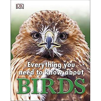 Alles wat die u moet weten over vogels