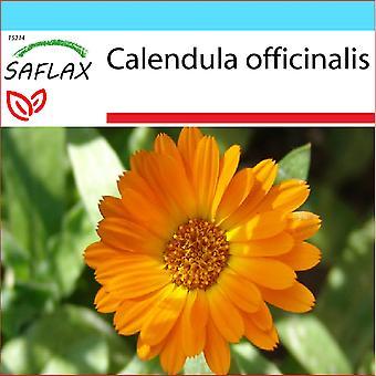 Saflax - Gift Set - 50 zaden - Pot Marygold - Souci - Calendula - Botã³n de oro - Ringelblume