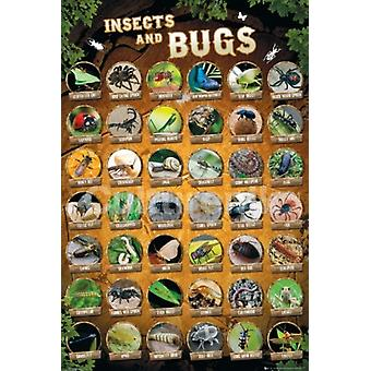 الحشرات والبق تجميع ملصق طباعة ملصق
