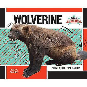 Wolverine: Powerful Predator (Animal Superstars)