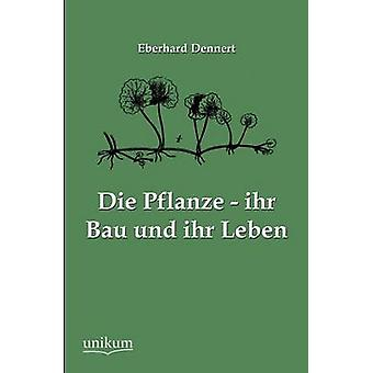 Die Pflanze ihr Bau und ihr Leben par Dennert & Eberhard