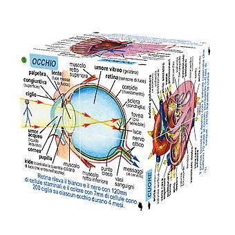 ZooBooKoo ITALIAN Human Body Systems and Statistics Cubebook - Fold-Out Cube