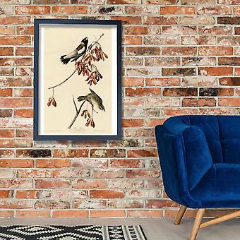 John James Audubon - Rice Bird Poster Print Giclee
