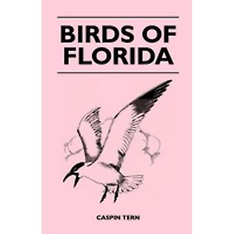Birds of Florida by Tern & Caspin
