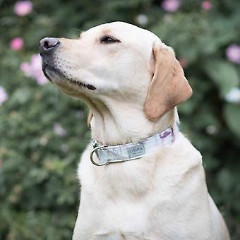 Dog Collar - crocus