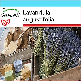 Saflax - Set cadeau - 150 graines - lavande anglaise - Lavande vraie - Lavanda - Lavanda - Echter Lavendel