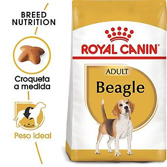 Royal Canin  Beagle Adult Pienso para Perro Adulto de Raza (Perros , Comida , Pienso)