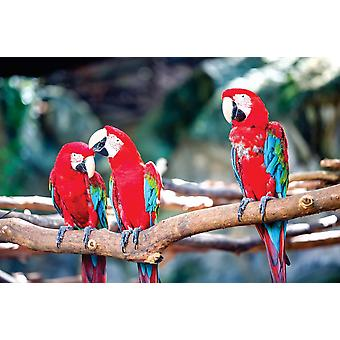 Macaw perrots stand on log
